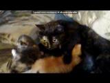 «кошки» под музыку Колыма - Котенок-Артемка. Picrolla
