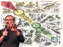 От ланцетника до динозавров и млекопитающих
