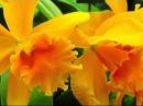Радужная релаксация. Оранжевый цвет