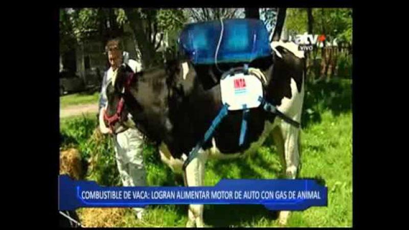 Usan los gases de la vaca como combustible para un automóvil