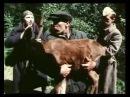 Плач перепелки - 7 Серия фильм