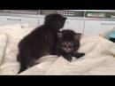 Отдам котят (мальчик и девочка, родились 22-24 июня) в добрые руки!