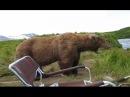 Самые неожиданные встречи с медведем / The most unexpected meeting with a bear