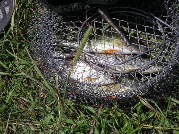 как правильно хранить рыбу летом