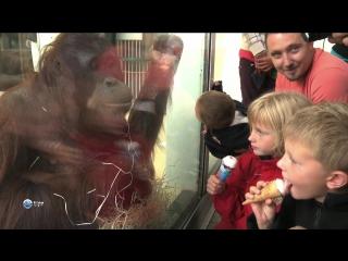 Звезды зоопарков мира 13