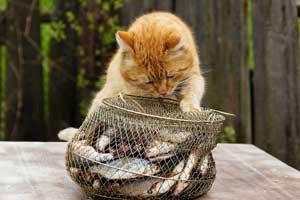как сохранить улов в жару