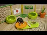 Top 5 funny video about a hamster. ТОП 5 Лучшие ВИДЕО ПРО СМЕШНЫХ ХОМЯКОВ.