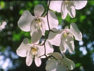BBC. Невидимая жизнь растений. 04. Борьба за выживание