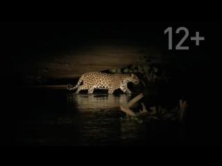Неизвестная Бразилия (2012) дикий патонал