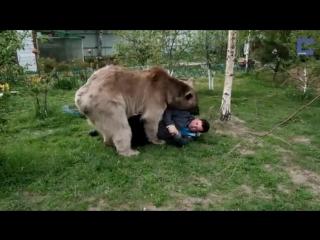Медведь Степан и его семья