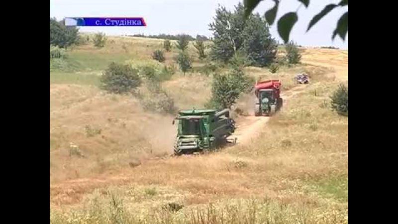 Жнива у розпалі На Калущині почали збирати врожай зернових