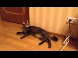 кот Шурик общается с хозяином