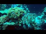 Кораллы Чудеса подводного мира океана