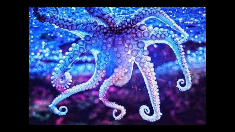 Индийский океан Подводный мир.