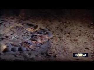 Antico Testamento - Tracce archeologiche - Bibbia - Passaggio a Nord Ovest