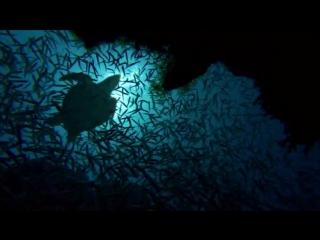 Большое путешествие вглубь океанов 3D: Возвращение. Трейлер.