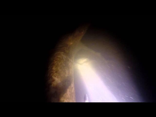 подводная охота 2016 карпы в засаде