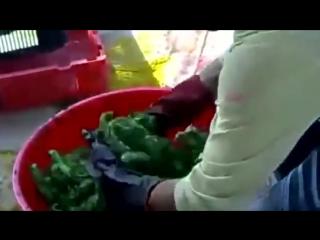 Renkli civciv vahşeti