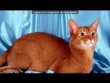 «Угадай породу» под музыку котята - мяуууууу. Picrolla