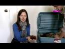 Какое отношение черви имеют к зеленому офису Татьяна Лаврова
