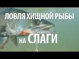 Рыбалка спиннингом на приманки слаги. Ловля рыбы на джиг на силиконовые приманки