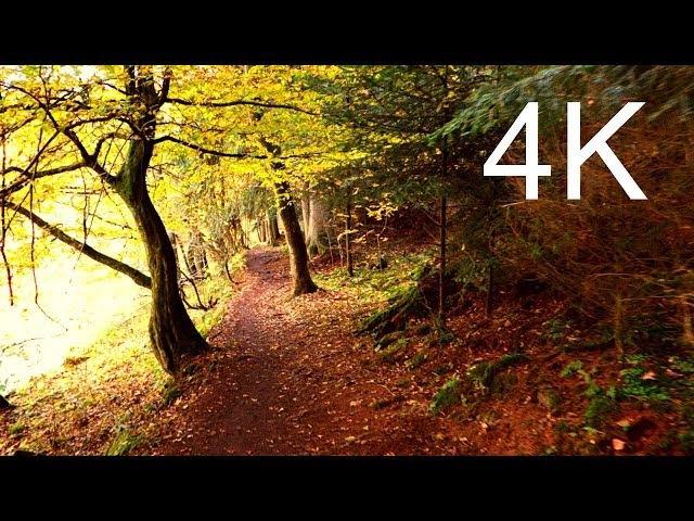 Ultra HD Video SEPTEMBER FOREST WALK
