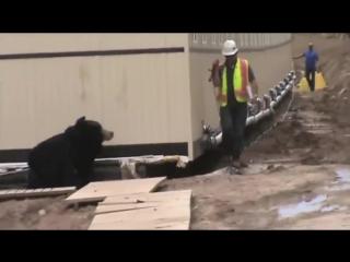 Коллега испугал парня своим костюмом медведя