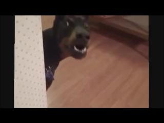 Собака на дачу собирается