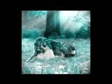 Волк отомстил. Печальная история про одного волка. до слёз...