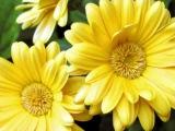 Радужная релаксация. Желтый цвет.
