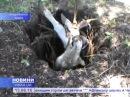 На Черкащині корову довелося витягати з ями трактором