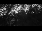James Blackshaw - We Who Stole The Dream