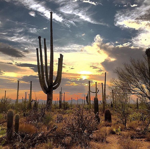 национальный парк фото, Национальный парк Сагуаро, Saguaro National Park