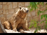 Haifas Zoo