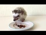 Гриша кушает туркменских тараканов