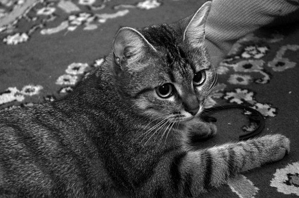 вот она какая, кота-кота