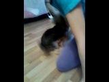 Собака трахает свою хозяйку