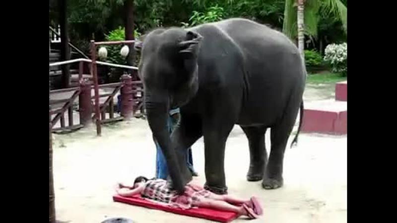 Тайско-слоновий массаж