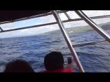 Доминикана киты залив Самана