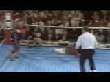 Boxing Vines Mike Tyson By Ali