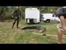 Укротители аллигаторов. Переезд или банкротство