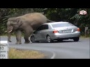 по улицам слона водили...