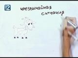 Art и факты. Осьминог и коза уходят от опасности   http//vk.com/utronovoe