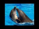 Самые красивые фото- море, дельфины, люди и многое другое_low