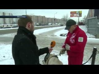 Хозяин-живодер рассказал РЕН ТВ об издевательствах над собакой