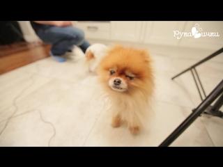 Собака подмигивает! (рукавички)