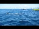 Воспоминания из Мексики Купание с китовыми акулами