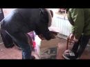Розпаковка флор тома Maxtone 16 і різного драм барахла)