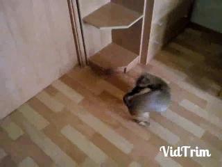 смешные животные, собака