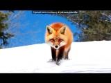 Животные под музыку 5000WATT 18+ -